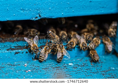 Picture of bees in the hive outlet