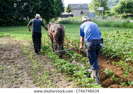 Horses Ploughing potatoes field in spring. Farmers with plough horse ploughing field. Ridging up potato plants. Earth up potatoes. Agriculture. Working with land #1746748634