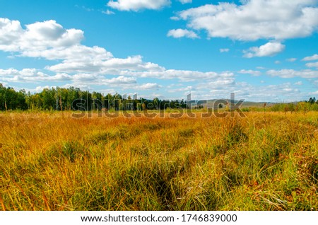 Beautiful field on a background of the blue sky and clouds. Bright sunny evening. Country landscape. Autumn mood. Beautiful natural landscape of Russia. #1746839000