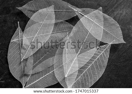 Black and white leaf picture textrue background