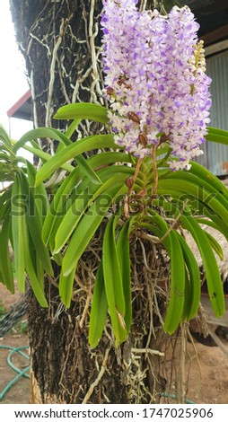 """Orchid,The orchid is a picture showing the noble and terrifying beauty among the prehistoric Greeks. The orchid flower represents the reproduction of the tribe. But for the Chinese monarchs """"or a rel"""