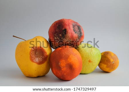 lots of fruits that have gone bad. food mold. fridge fungus. apple, pomegranate, orange and a lemon spoiled. bad dangerous storage. nitrate poisoning. food waste. grey background