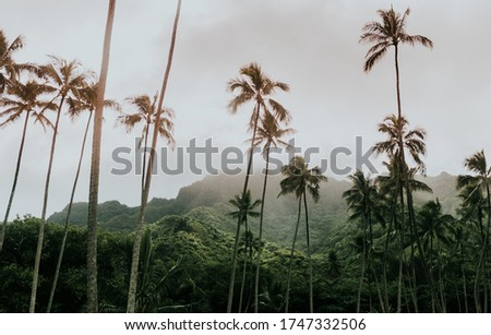 A beautiful vertical picture of palms against a foliage mountain