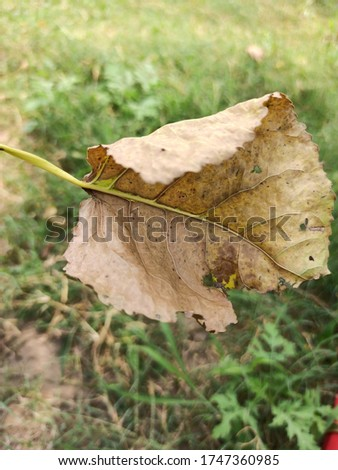 Autumn brown leaves   Real Nature Pic