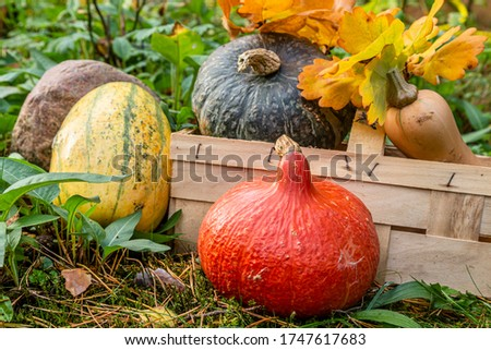 red kuri squash, butternut squash, spaghetti squash in a garden #1747617683