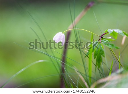 Close up of wild flowers and grass in meadow with shallow depth of field and blurred background nature photography