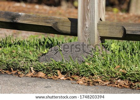 Large red ant mount hiding under a fence post in Florida, USA.