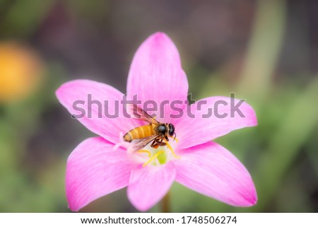 Amazing nature view of bee pink flower on blurred greenery background in garden and sunlight with copy space using as background natural green plants landscape, ecology, fresh wallpaper concept.
