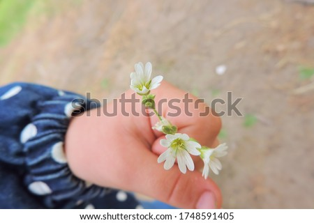 white wildflowers in a child's palm