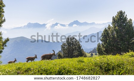 landscape of the high plateaus of the South Vercors, Combeau valley, France #1748682827