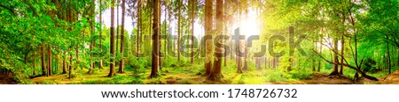 Forest panorama with bright sun shining through the trees Royalty-Free Stock Photo #1748726732