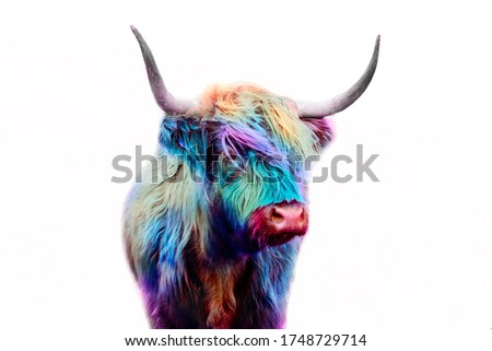 highland cow colorful dyed hair, punk concept Royalty-Free Stock Photo #1748729714