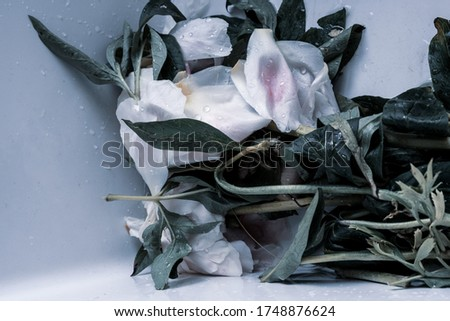 Flowers: Desaturated image of cut flowers in basin o sink with droplets of water on the flower petals