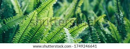 Fern leaves. Green fern plants in nature landscape. Fern plants in forest. Fresh green tropical foliage. Rainforest jungle landscape. Green plants nature wallpaper. Organic nature background. Royalty-Free Stock Photo #1749246641
