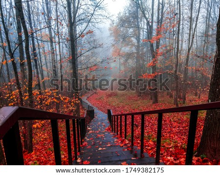 Red autumn forest park stair view. Misty forest red autumn stair landscape. Stair in red autumn misty forest park #1749382175