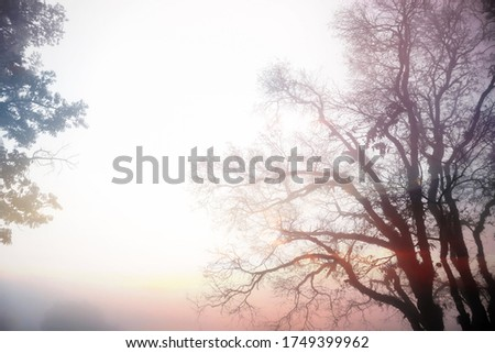 Photography effect of silhouette blurry trees in the winter fog twilight atmosphere show beautiful texture of branch isolated on white sky. #1749399962