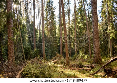 Forest trees in sunny day. Wilderness forest trees view #1749489479