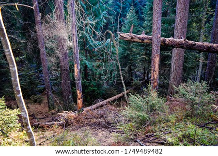 Wilderness forest trees scene. Forest trees wilderness. Forest #1749489482