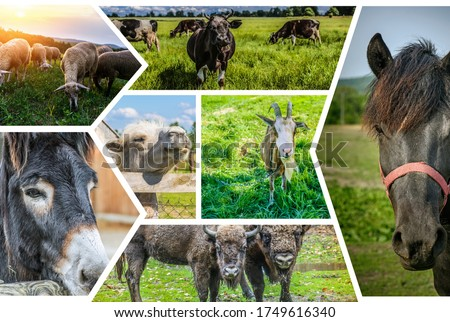 Photo collage Herbivorous animals: sheep, cow, donkey, camel, goat, bison, horses. #1749616340