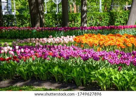 Colorful tulips flowers in spring park #1749627896