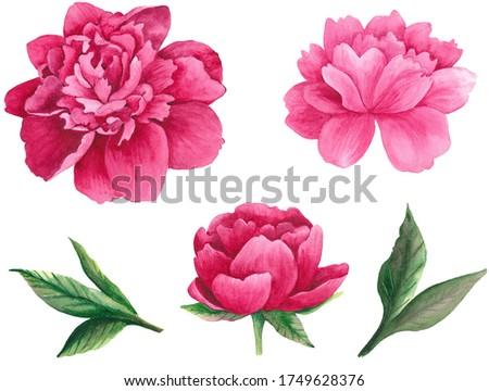 Watercolor pink peony clip art