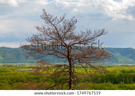 In the summer afternoon, a dried tree is struck by the larvae of Caroids Scolytinae against the backdrop of a beautiful landscape., background in soft focus, background #1749767519