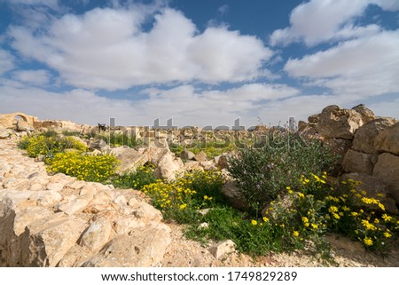 Scenic spring view of the ruined Ancient Nabataean city of Avdat, now a national Park, in the Israel's Negev Desert, Southern Israel. #1749829289