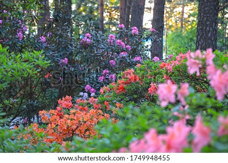 Scenic landscape with bright purple pink orange blooming flowers on green leaves background, bright plants bloom in park, garden flowers on trees background #1749948455