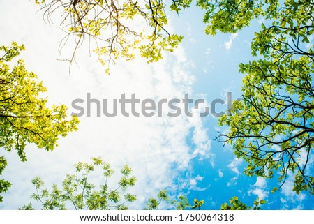 Image looking up from under a tree, a tree with green leaves Isolated on a white background, space for text input, billboard design view