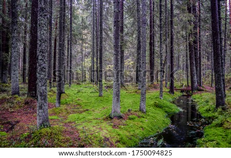 Wilderness mossy forest trees background. Mossy forest winlderness scene. Deep forest trees green moss view #1750094825