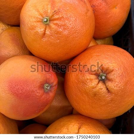 Macro photo fruit grapefruit. Stock photo citrus fruit  food grapefruit #1750240103