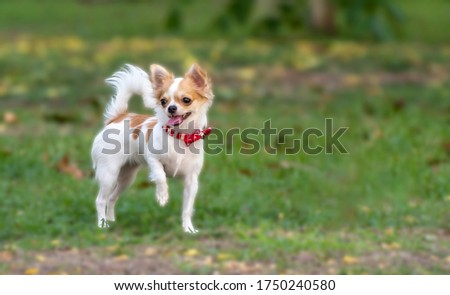 The Chihuahua(About this soundlisten);[1] Spanish: chihuahueño) is the smallest breed of dog, and is named after the Mexican state of Chihuahua.