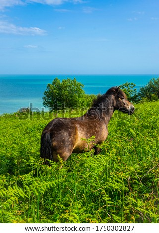 Wild Horses Grazing & Playing in the Wild with Natural Scenery  #1750302827