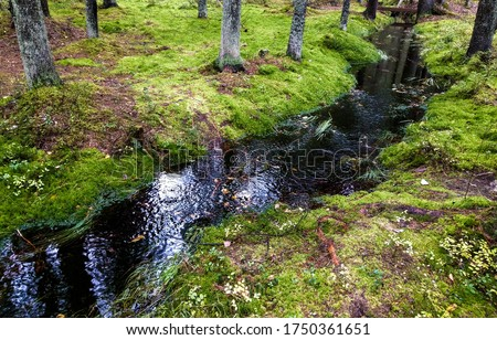 Mossy forest river creek view. Wilderness forest moss creek. Forest creek in moss wilderness woods #1750361651