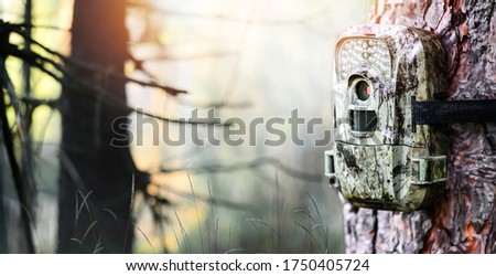 Camera trap or photo cameras mounted on pine tree in deep forest for wild animals location.  Wide banner or panorama photo.