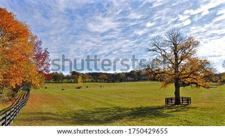Horses quietly grazing in a pasture on an Ontario farm in autumn with vivid fall colors in the trees