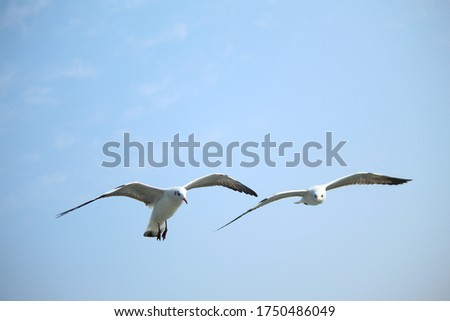 Gulls or seagulls or beach chickens are seabirds of the family Laridae in the suborder Lari.  Royalty-Free Stock Photo #1750486049