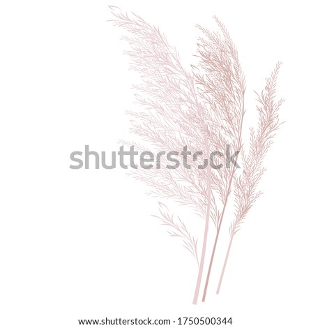 Vector stock illustration of pampas grass. Cream branch of dry grass. Panicle Cortaderia selloana South America, feather flower head plumesstep. Soft pink color. Template for a wedding card. Royalty-Free Stock Photo #1750500344