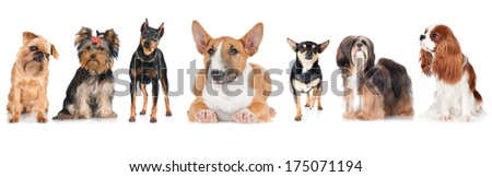 group of dogs on white #175071194
