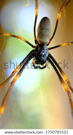 Detailed picture of Golden Orb Weaver spider