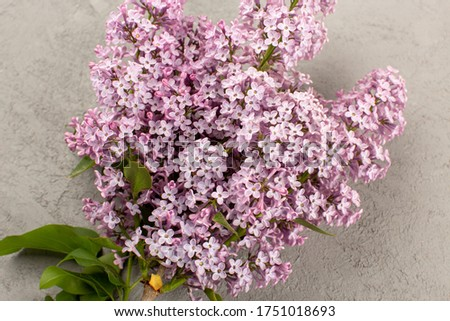 a top view purple flowers alive beautiful isolated on the grey floor #1751018693