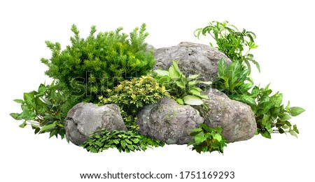 Cutout rock surrounded by flowers. Garden design isolated on white background. Flowering shrub and green plants for landscaping. Decorative shrub and flower bed. #1751169293