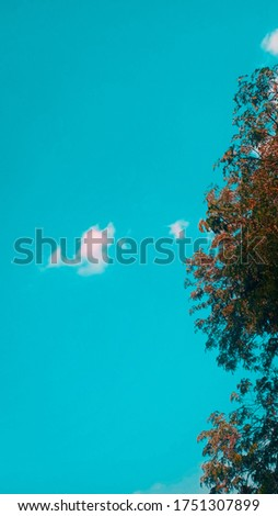 Its a sky pic capture at noon time when sky is seen very beautiful with the uper level of a tree