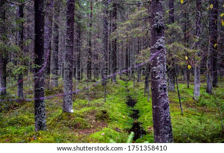Wilderness mossy forest trees background. Depp forest trees in moss. Green moss wilderness forest trees. Forest moss #1751358410