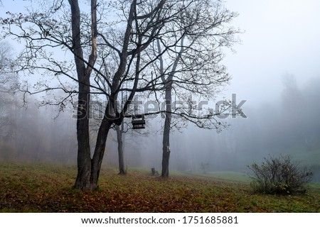 Autumn fog in misty forest park. Forest mist tree in autumn. Autumn forest mist tree. Autumn mist forest tree view #1751685881