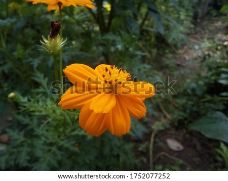 very good flowers like marigold maiden pink Anar flower  etc.. are included in these pic.