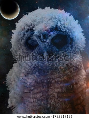 A abstract double exposure picture of an owl and a starry night sky.
