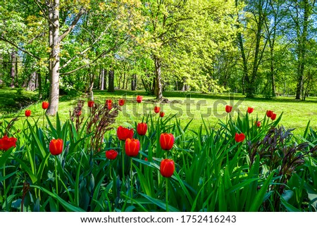 Summer green meadow red tulip flowers landscape. Red tulip flowers in summer park garden
