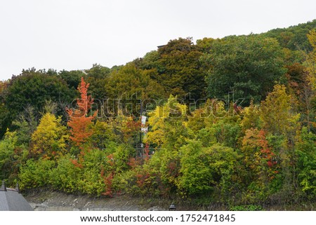 Beautiful fall colorful trees and leaves #1752471845
