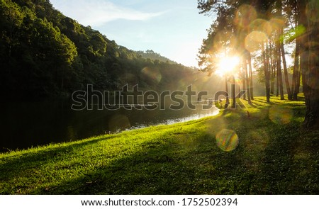 The natural landscape scenery of the lake, yellow-green grass and pine forest is a direct warm-toned evening sunlight shot. Cause lens flare effect. Feel relax and peaceful in this outdoor picture.